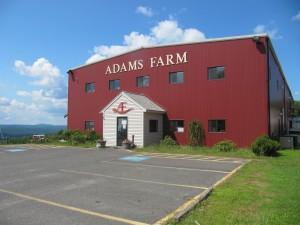 Adams Farm, August 2015. Photo: Cathy Stanton