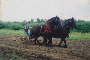 John M. Moore III plowing with Jack and Jill. Photo courtesy of the Moore family.