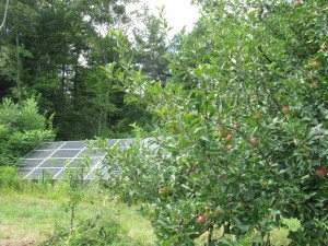 Fruit trees planted in the 1980s are now maturing, while PV panels help keep the farm's energy demands very low. Photo: Cathy Stanton