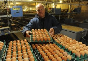 man with trays of eggs